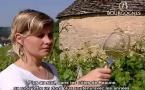 Bourgogne ses vins blancs