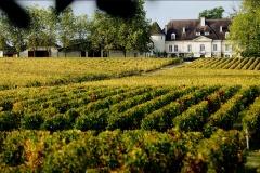 Château Bouscaut et vignoble