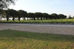 Monbrison vigne allée G