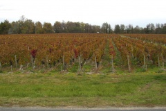 Martinens vignoble