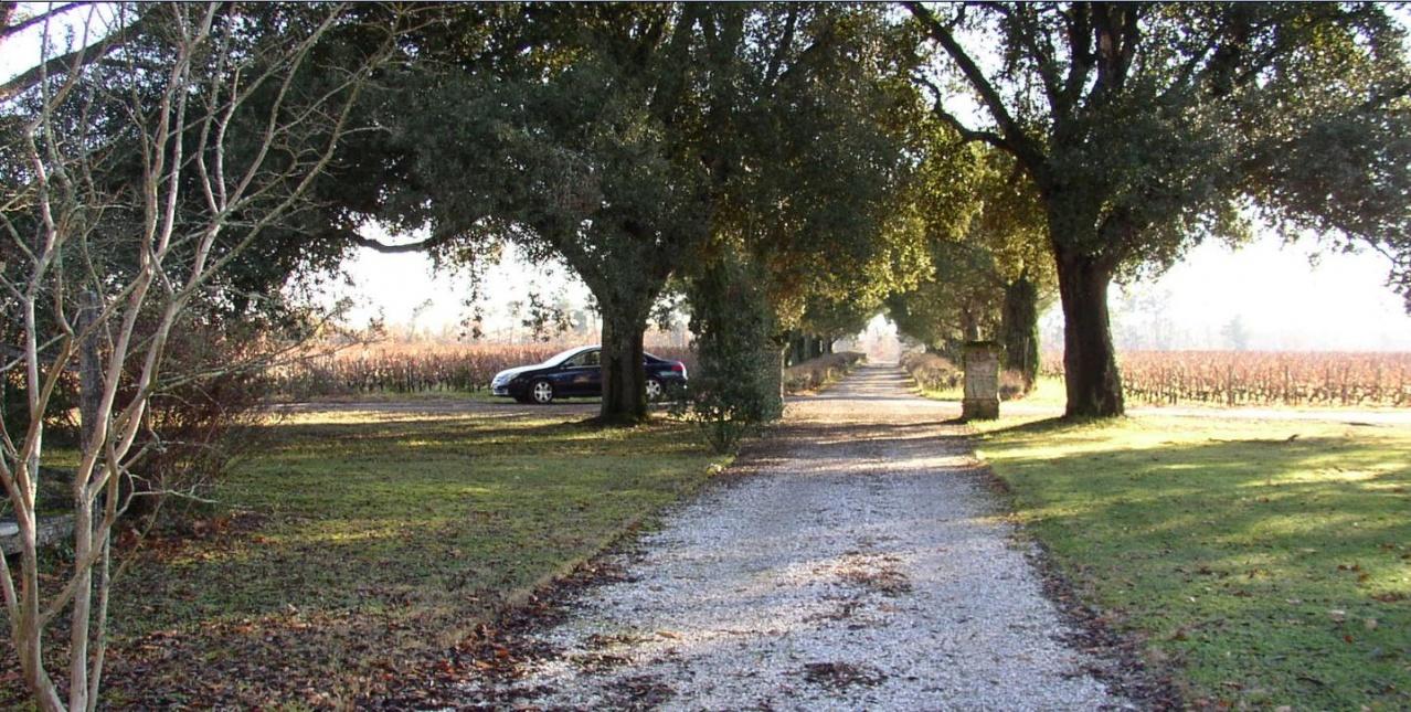 Monbrison  Domaine Vignes