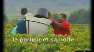 Bourgogne vendanges 1