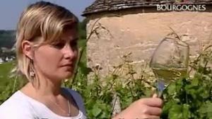 Bourgogne - Millésime 2014 vins blancs
