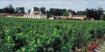 Brane Cantenac Vignes château