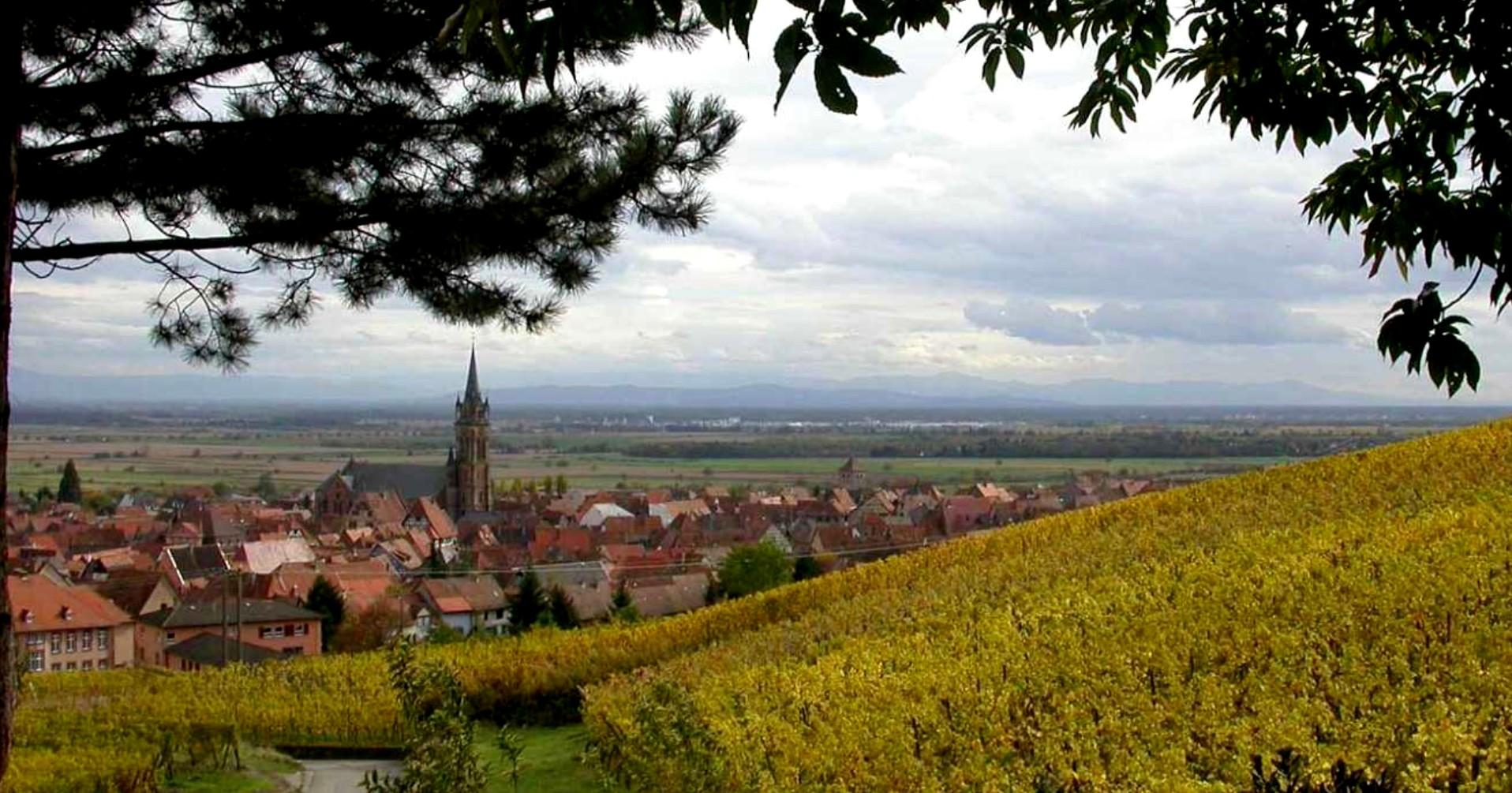 L'Alsace, son Vignoble, ses Vins.