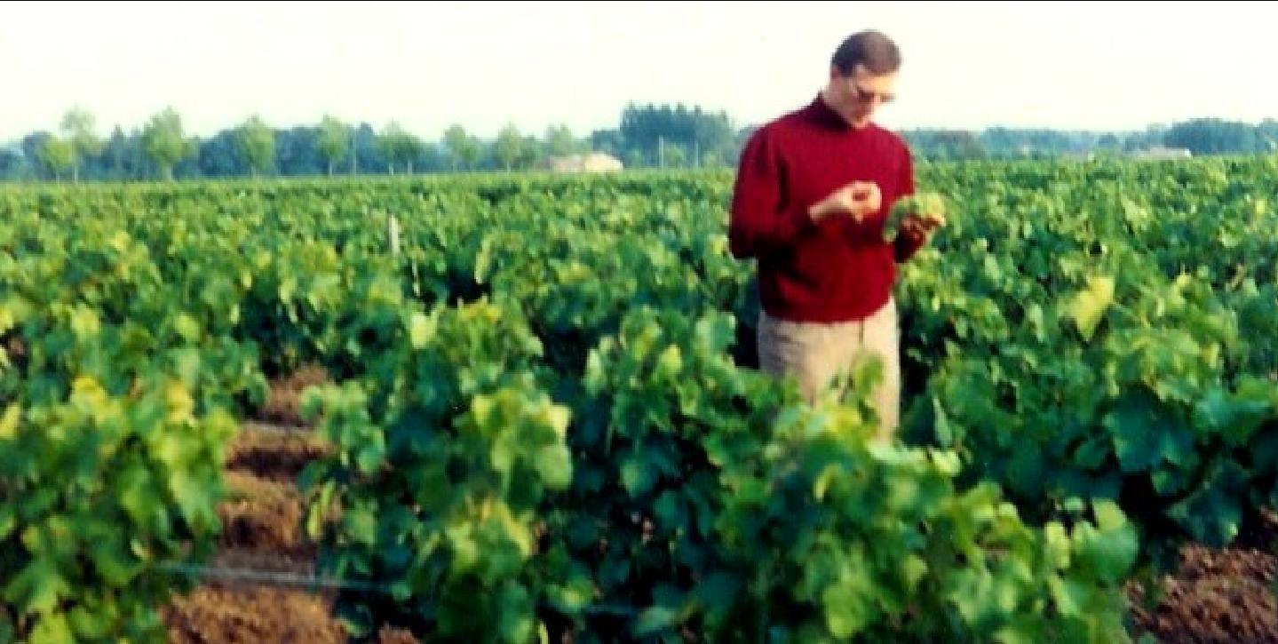 Les Années 1960 - vignobles Médoc - analyse nouvelle récolte