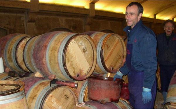 Le cycle du vin rouge - Chapitre II : L' élevage