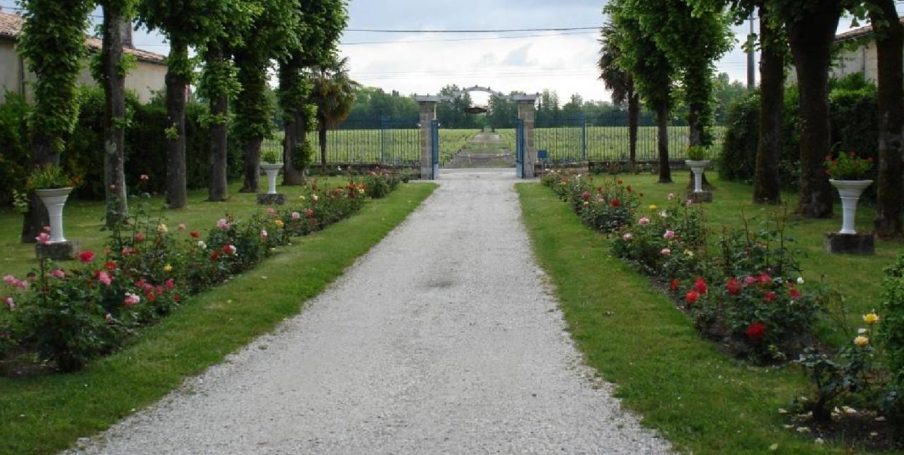 Martinens allée vignes