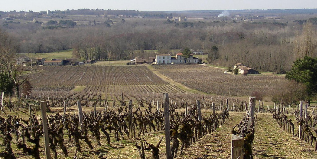 Lamote vignoble